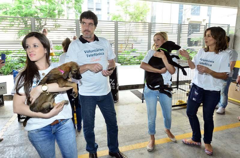 Voluntários Fundação Telefônica em ação com os animais