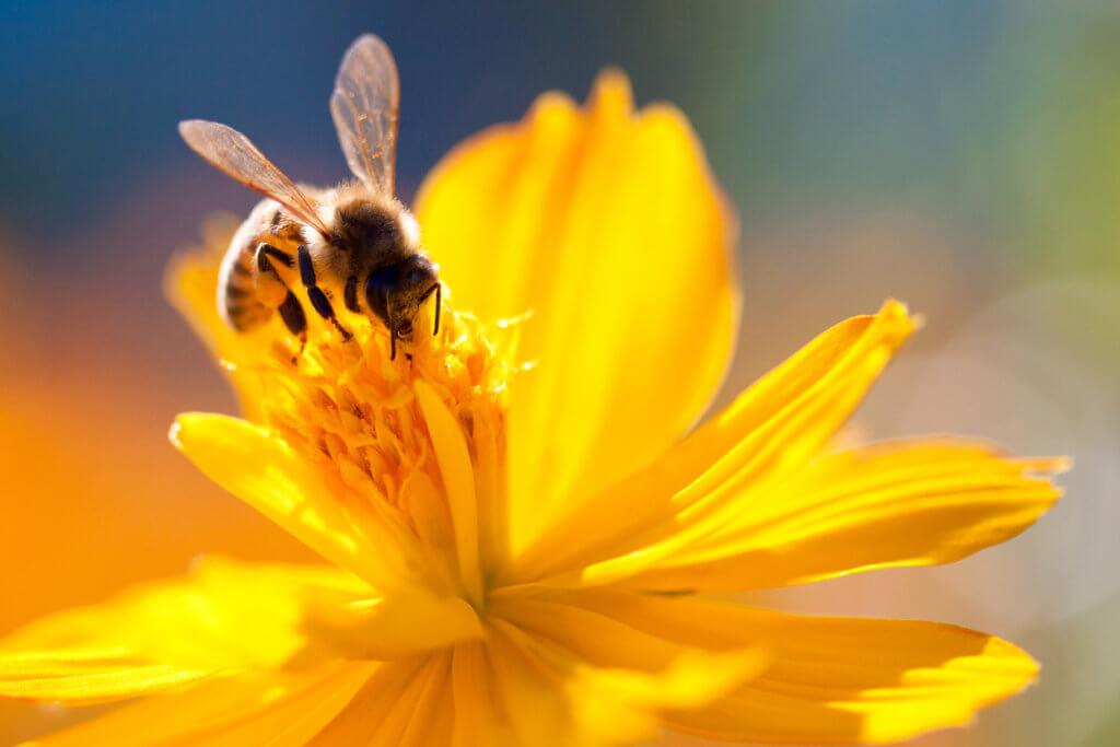 biomimética e voluntariado