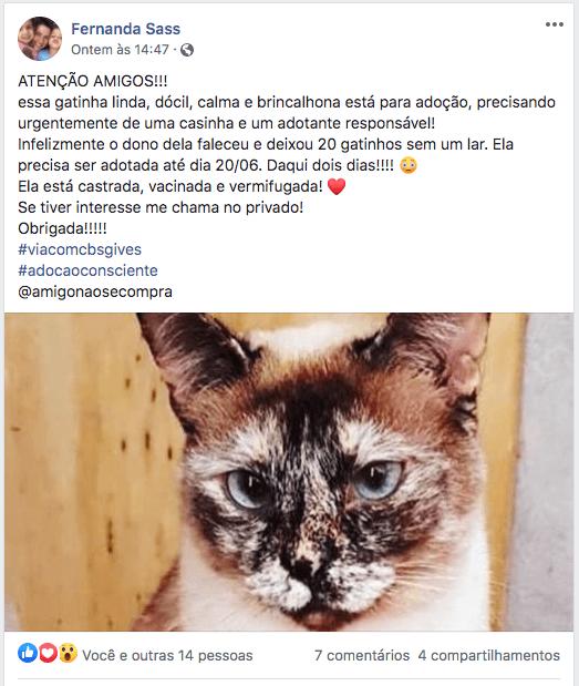 voluntariado online proteção animal